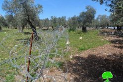 Israeli Occupation Forces set up a fence alongside agricultural lands of Yabad town