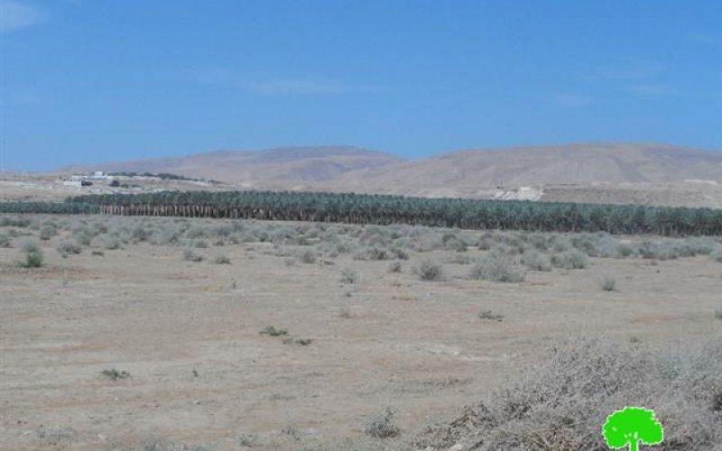 جيش الاحتلال يمنع المزارعين من زراعة 650 دونماً بغراس النخيل في قرية العوجا