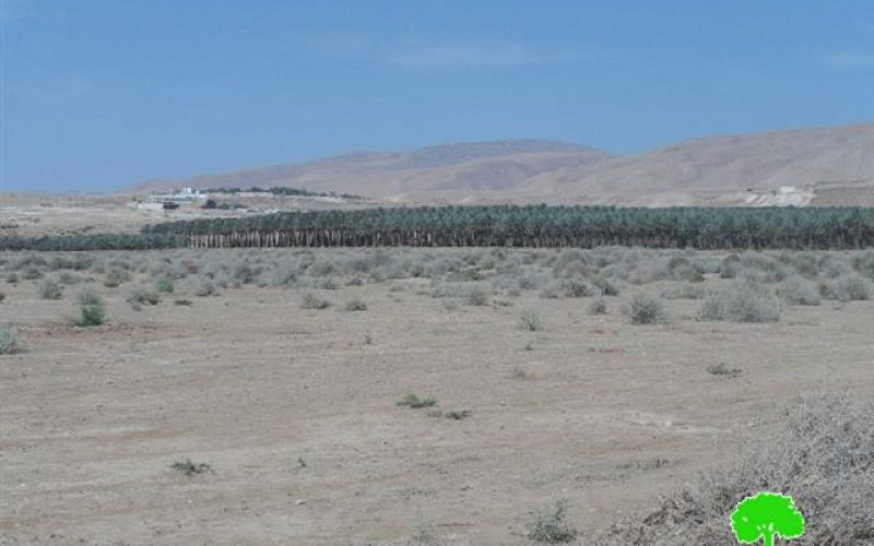 Israeli Occupation Forces prohibit farmers from cultivating 650 dunums in the Jericho village of Al-Auja