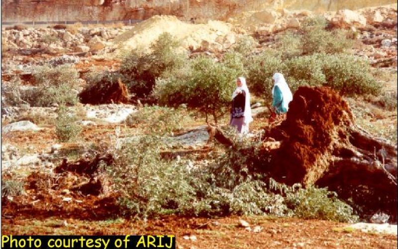 They Cut Trees, Don't They? An Assessment of the Israeli Practices on the Palestinian Agricultural Sector
