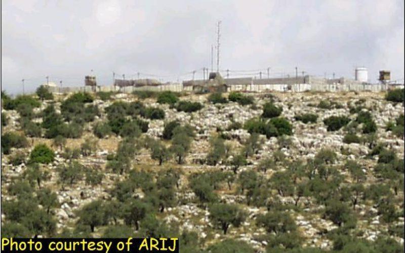 Israeli Aggression Impinges On Animals Too