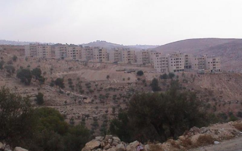 New Order in Beit Sahour City