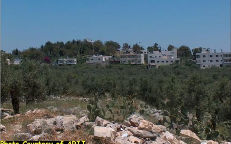 'Aboud, the city of flowers, threatened by the Israeli Segregation Wall