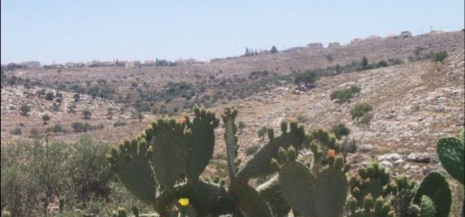"""In breach of the International law, the Segregation Wall continues to grab more Palestinian lands !!! """"The Case of Ni'lin Village. """""""