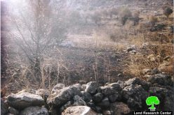 Separated Palestinain lands set into fire at the hands of Israeli settlers from Sha'are Tikva and Elkana settlements
