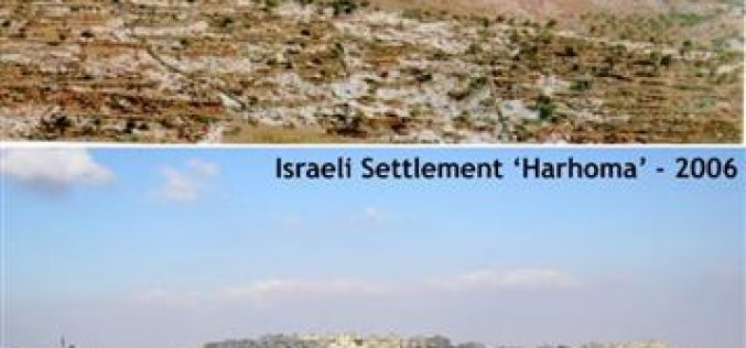 "Environmental ""Ecocide"": The undeclared Israeli War against the Palestinian Trees"