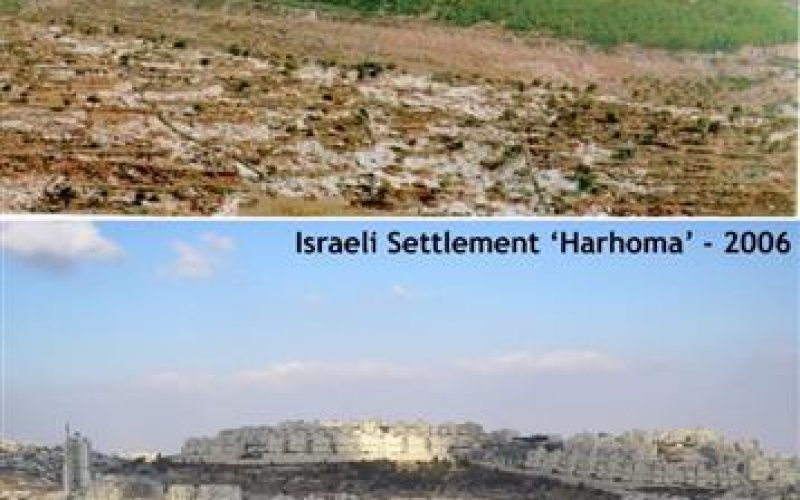 """Environmental """"Ecocide"""": The undeclared Israeli War against the Palestinian Trees"""
