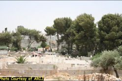 Uprooting of Trees in the Vicinity of Rachel's Tomb