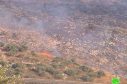 Israeli arson war continued against Palestinian agricultural land in Far'un village