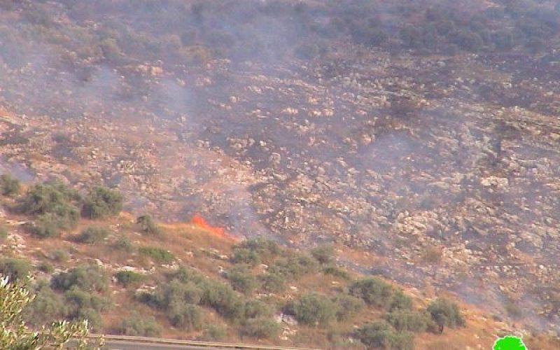 Israeli arson war continued against Palestinian agricultural land in Far'un village