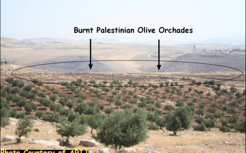 Israeli Settlers Set Fire to Palestinian Agricultural Lands in the Village of Tequ' in Bethlehem Governorate