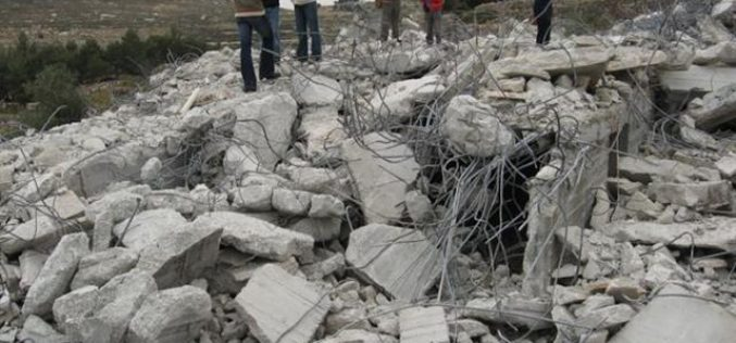 Settlers' war continues against trees and land in Hebron Governorate
