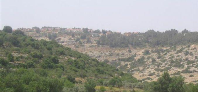 تزايد وتيرة قطع و تخريب الأشجار الزراعية في واد قانا و قرى غرب نابلس