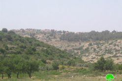 An Increase in the Frequency of Israeli Settlers' attacks in Wadi Qana village