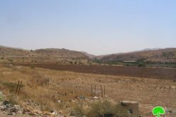 Confiscation of 356 Dunums in Northern Jordan Valley