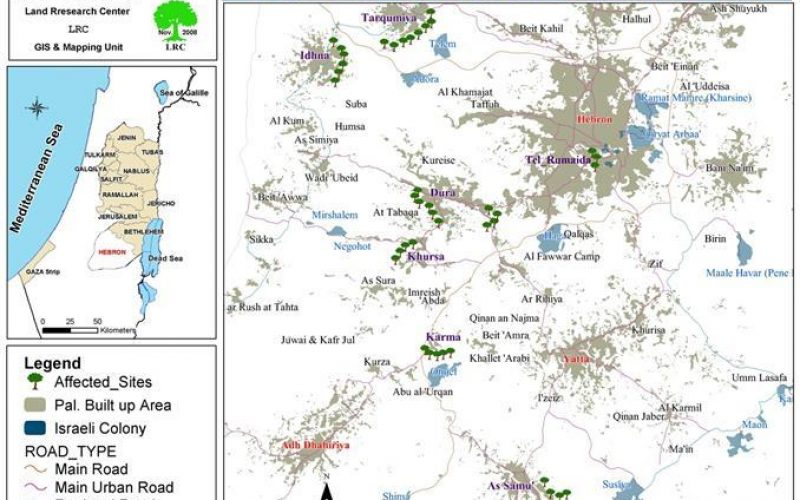 Olive harvest Season in Hebron Governorate: A Dangerous Endeavor