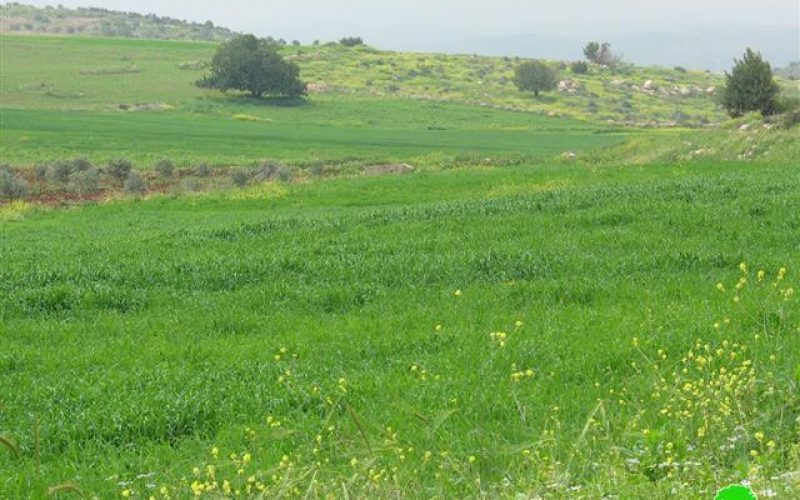 Palestinian Farmers prevented from tending their lands in the eastern side of the Segregation Wall's path