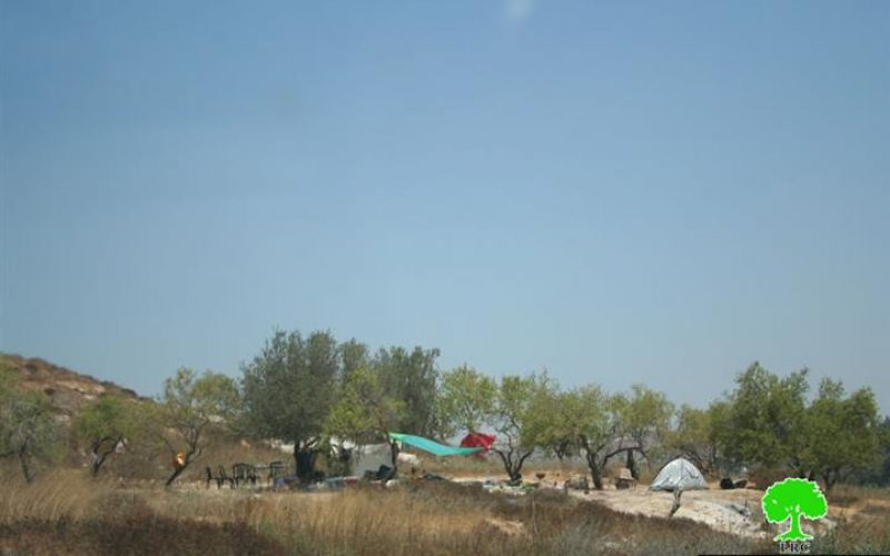 Gilad Zoher colony: a source of  continuous aggression against Palestinian farmers
