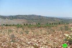 Israeli Military Orders Vacating 380 Dunums of Ya'abad Lands as a Prelude to Confiscation