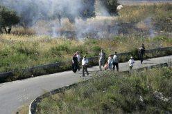 مستوطنو غلعاد زوهر يحرقون مزيداً من  الأراضي الزراعية الفلسطينية في قرى غرب مدينة نابلس