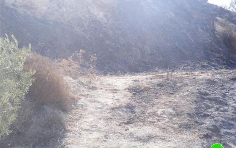 المستعمرون الإسرائيليون يحرقون مساحات واسعة من الأراضي الزراعية الفلسطينية
