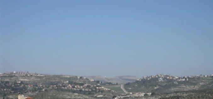 Israeli Colonists Uproot Tens of Olive Seedlings in Kafr Kaddum village