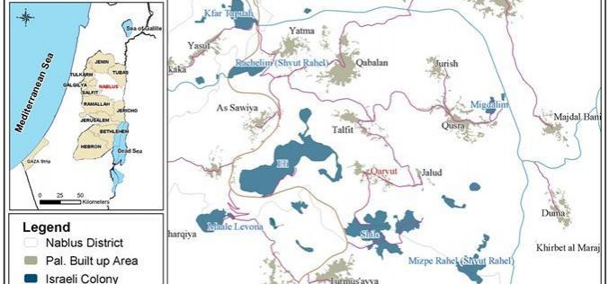 مستوطنون يقتلعون 27 شجرة زيتون مثمرة من أراضي قرية قريوت