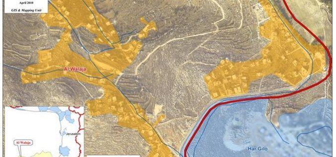 اقتلاع 100 شجرة زيتون مثمرة وعدد آخر من أشجار اللوزيات في قرية الولجة