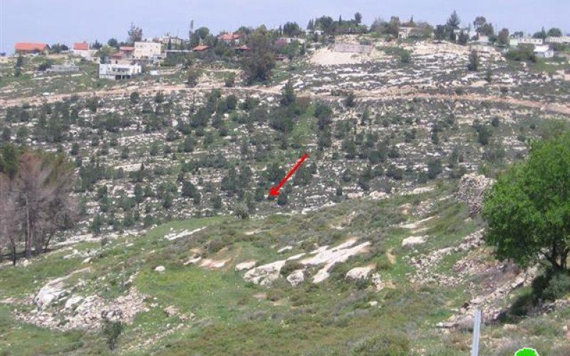 """مستعمرو """"بيت عين""""يقتلعون 30 غرسة زيتون من أراضي بيت أمر"""