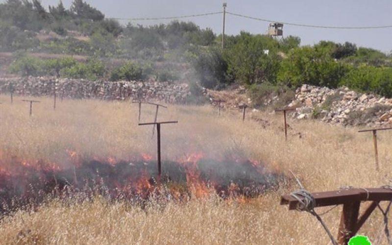 إضرام النار في الأراضي الزراعية  بلدة بيت أمر في محافظة الخليل