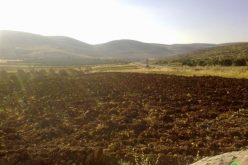 Colonists of A'adi A'ad Outpost Torch 40 Dunums in the Village of Al Mughayyer – Ramallah Governorate
