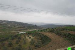 إتلاف 60 شجرة زيتون في قرية جينصافوط – محافظة قلقيلية