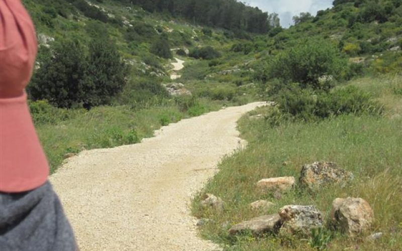 Connecting Colonies in Wadi Qana with a road Network