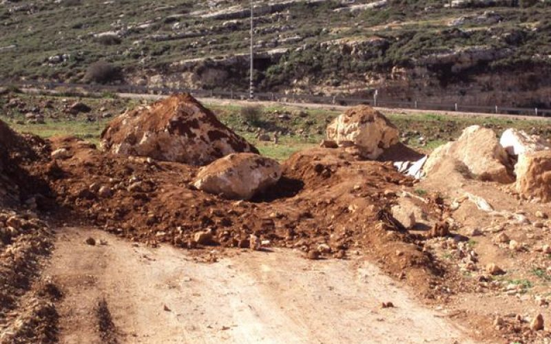 Colonists of Shavot Rahil Uproot 60 Olive Trees of Qaruit Lands – Nablus Governorate