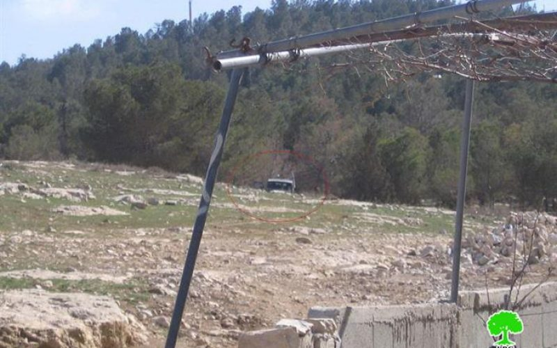 Ma'oun Colonists Unleash their Cattle in Palestinian Lands