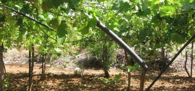 Confiscation of Irrigation Networks in Al Baq'a area