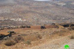 الأغنام والمراعي هدفاً للاحتلال في الأغوار الشمالية