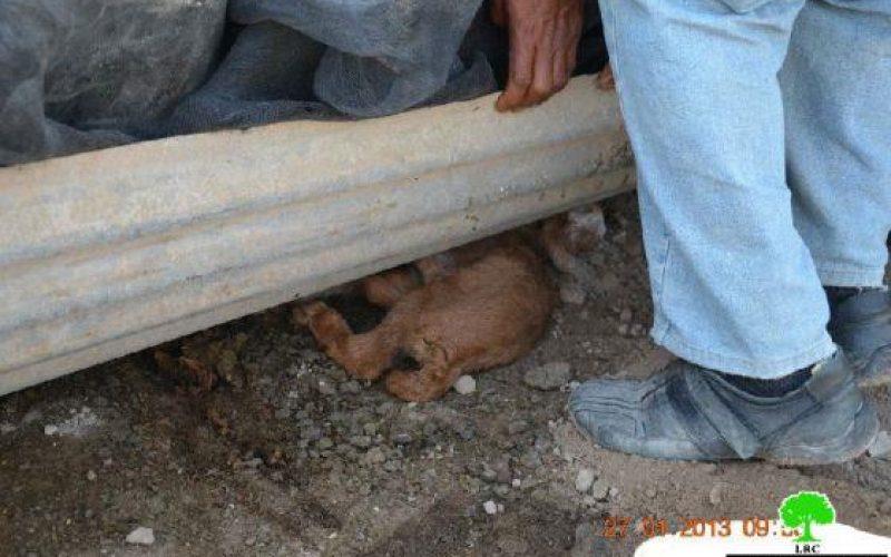 الاحتلال الإسرائيلي يهدم 9 بركسات زراعية في قرية الجفتلك