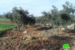 مستعمرون يعتدون على 40 شجرة زيتون في بلدة بيت عوا غرب الخليل