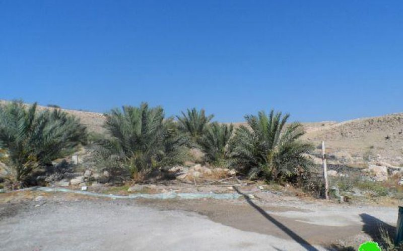 A Mililtary Order Demanding the Removal of 110 Palm Trees