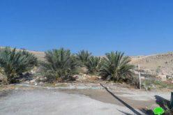 الاحتلال الإسرائيلي يخطر باقتلاع 110 شجرة نخيل في قرية الزبيدات