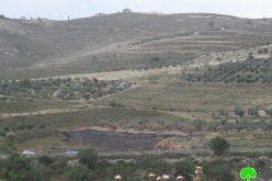 إحراق  137 شجرة زيتون وقطع 10 أشجار أخرى في قرية بورين