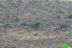 إعدام 480 شجرة زيتون معمرة بدم بارد عبر رشها بمواد كيمائية سامة في قرية عورتا