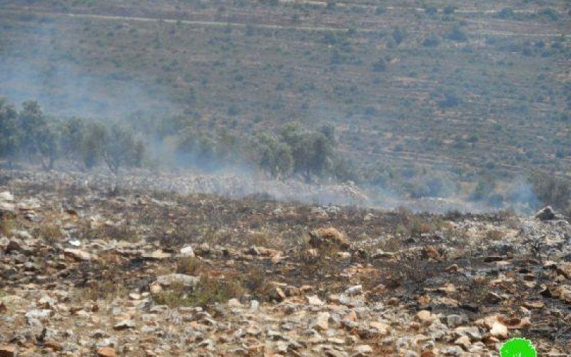 إحراق 11 دونماً مزروعة بالقمح والزيتون في قرية جيت / محافظة قلقيلية