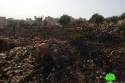 إحراق  25 شجرة معمرة  في قرية حوسان  / محافظة بيت لحم