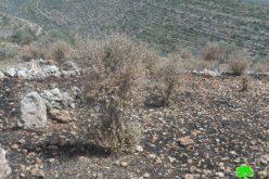 إحراق 4 دونمات في بلدة سبسطية /محافظة نابلس