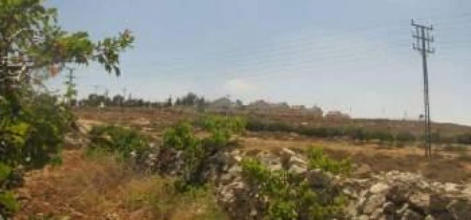 Colonists Try to Seize 70 Donums in Hebron