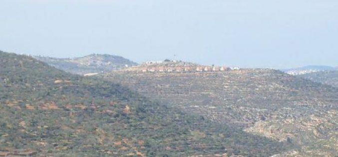 Damaging 700 Olive Trees in Nablus