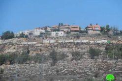 إتلاف 34 شجرة زيتون في قرية ترمسعيا / محافظة رام الله