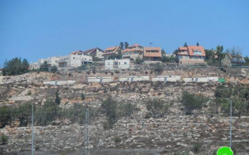 Damaging 34 olive trees in Tarmisiya/ Ramallah